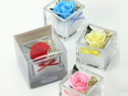 Rose Cube(Preserved Flower)