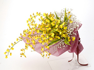 Oncidium Bouquet