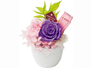 Candy Purple (Preserved Flower)
