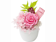 Candy Pink (Preserved Flower)